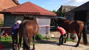 Pferde auf dem Reiterhof Never in der Nähe von Rerik